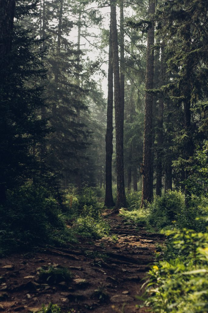 Wald_Waldspaziergang